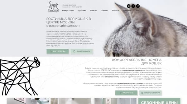 Зоогостиница Scandi Cat